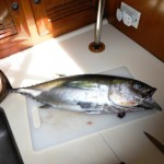 Freshly caught tuna | Boat Cuisine | Grenada Bluewater Sailing